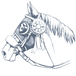 はじめての1日体験乗馬。東京からも近い関東の乗馬クラブ「バランス」の体験乗馬についてご案内します。